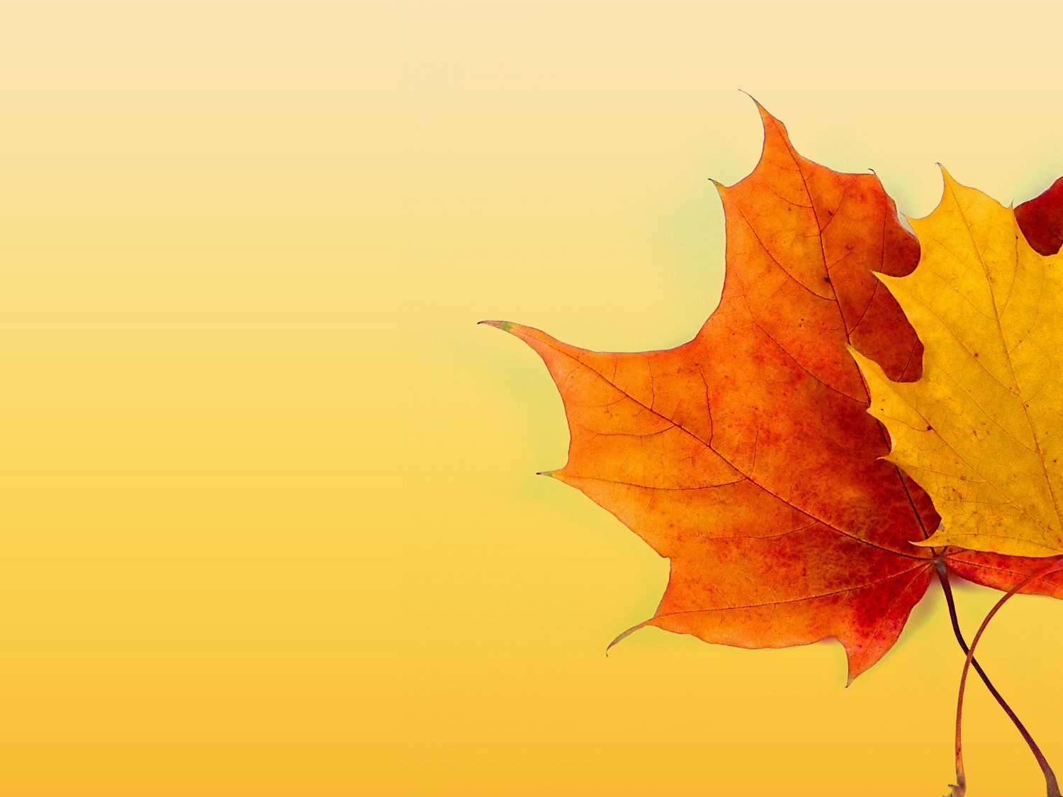 Autumn Ppt Background - Powerpoint Backgrounds For Free With Regard To Free Fall Powerpoint Templates